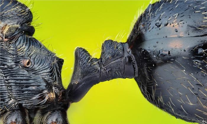 Угадываем объекты микромира по фото Микромир, Микроскоп, Микросъёмка, Фотография, Насекомые, Видео, Плесень, Длиннопост