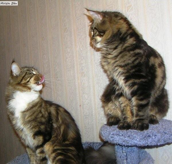 Два Кота. Кот, Отношения, Длиннопост