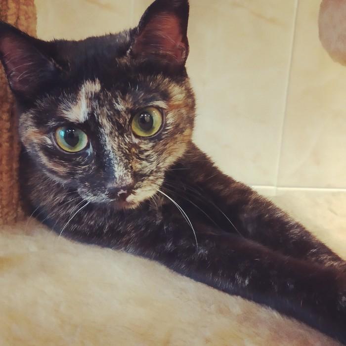 Просто фото котиков вам в ленту! :) Кот, Котомафия, Фотография, Добропост, Друзья, Длиннопост
