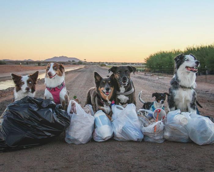 Четвероногие Чистомены Собаки и люди, Чистомен, Wild Keepers, Мусор