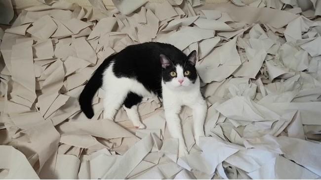 Хочу все знать #208. Хозяева обрадовали кота комнатой из 100 рулонов туалетной бумаги. Хочу все знать, Кот, Милота, Котомафия, Туалетная бумага, Радость, Игры, Питомец, Видео