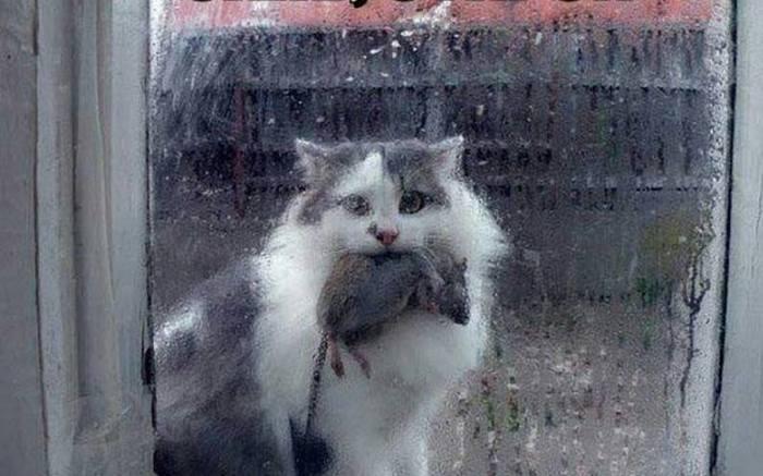 «МУСИЧКА» – удивительная история одной кошки Люди и кошки, Юмор, Байка, Длиннопост, Кот