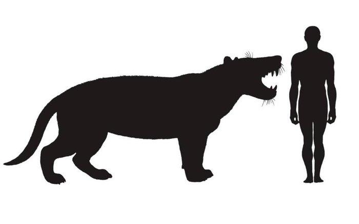 Simbakubwa kutokaafrika («великий лев из Африки») Палеонтология, Млекопитающие, Окаменелости, Африка, Длиннопост