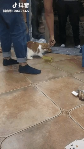 Котик ловит тряпку.