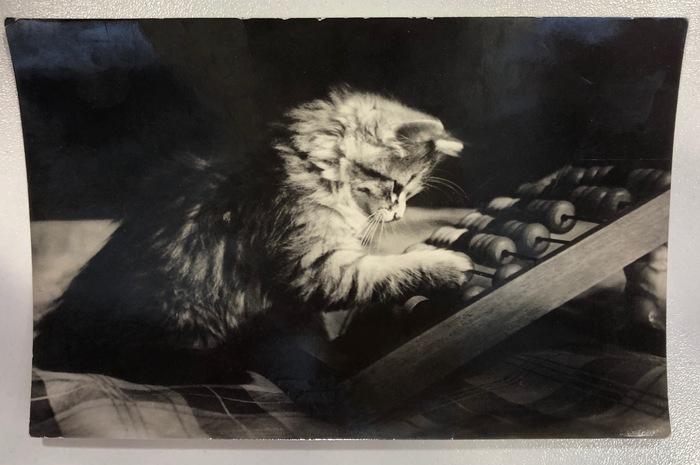 И в СССР фотографировали котиков) Кот, Котомафия, Старое фото, Открытка, СССР