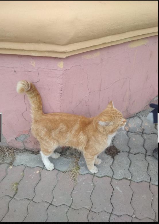Г. Томск. На улице сидит рыжий котик. Кот, Найдено, Длиннопост, Без рейтинга