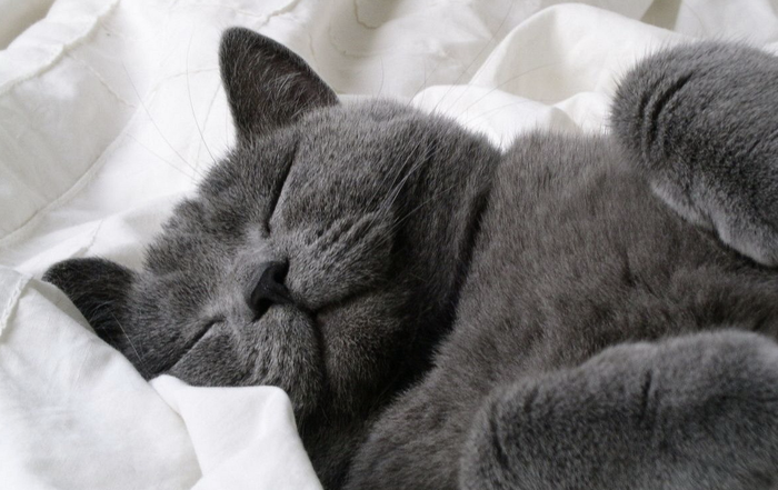 Как спать и высыпаться после 30. Не лайфхак - опыт и шишки. Здоровье, Сон, Выспался, Аптека, Таблетки, Лайфхак, Длиннопост, Мелатонин