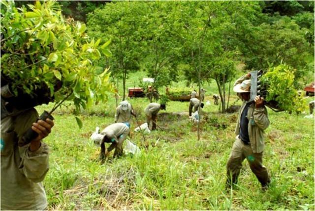 Люди - Земле Природа, Дерево, Лес, Окружающая среда, Экология, Длиннопост
