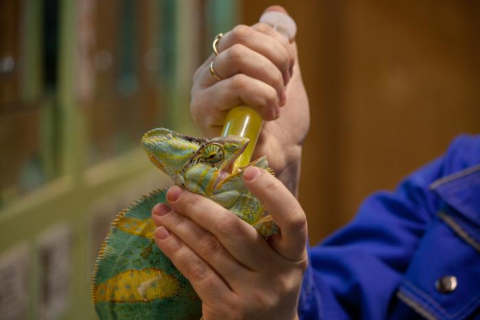 День ветеринара Челябинский зоопарк, Челябинск, Животные, Ветеринария, Дикая природа, Фотография, Длиннопост