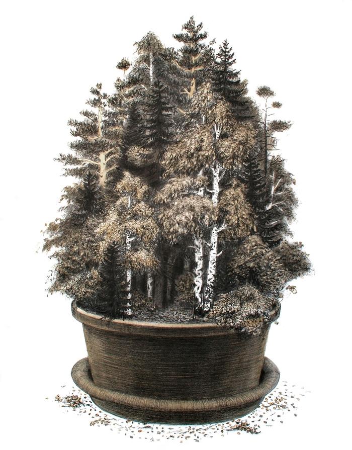 Немного леса Рисунок, Графика, Лес, Комнатные растения, Карандаш, Рисунок карандашом, Природа, Дерево