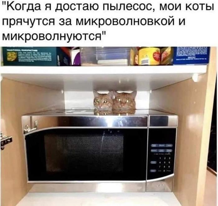 Котики микроволнуются