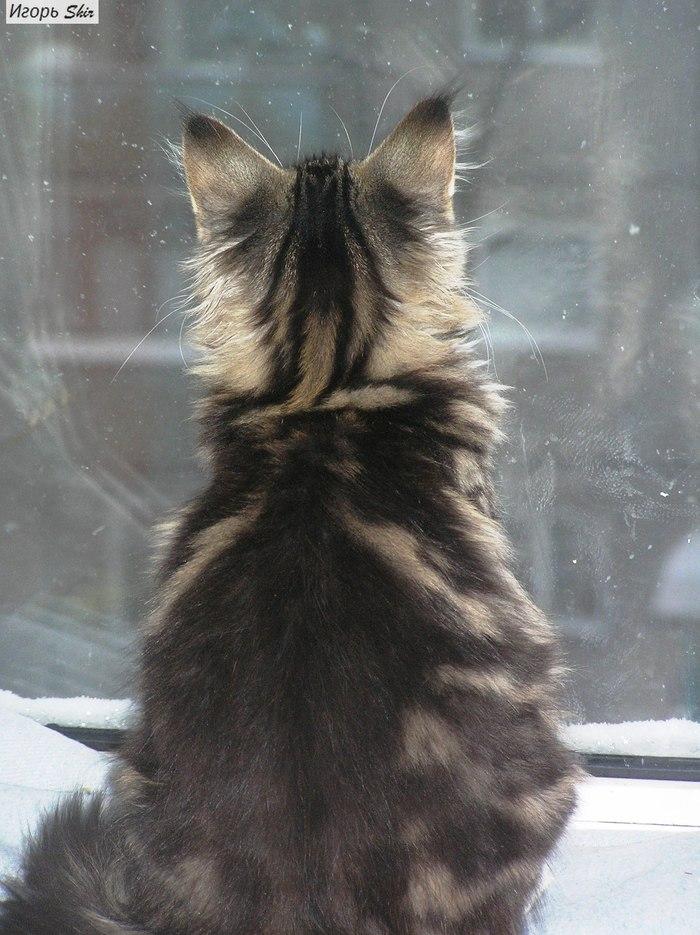 Не обижайте кошку. Кот, Семья, Длиннопост