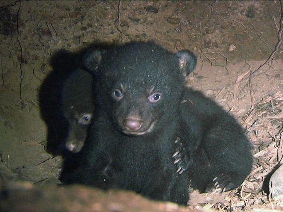 Если вы увидели испуганных медвежат, то страшно должно быть вам.