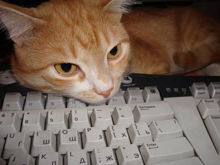 Кот Апельсин иMicrosoft Natural Keyboard Кот, Клавиатура