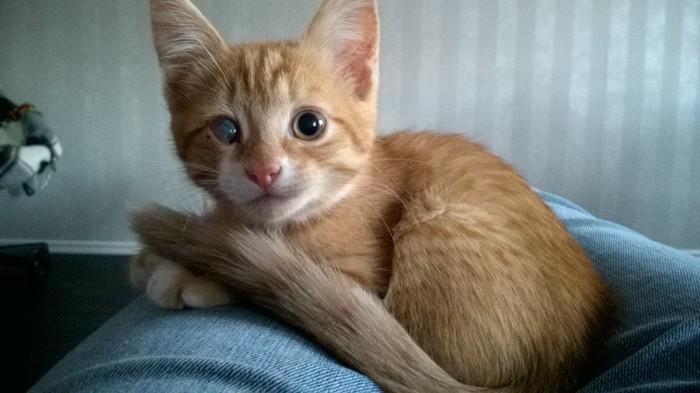 Моё кошачье (До и Сейчас) Кот, Котомафия, Домашние животные, Рыжие, Длиннопост