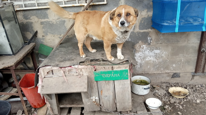 Пёс Чип начальник охраны