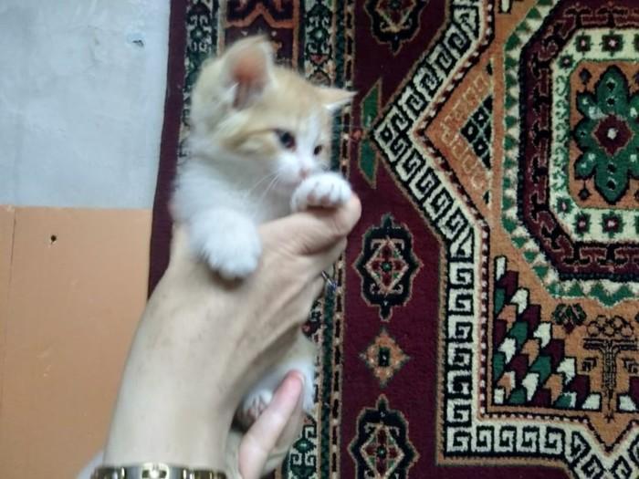 Отдам котят. Три кота и кошечка Котята, Длиннопост, Отдам, Кот, В добрые руки, Алматы