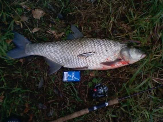Как разнообразить рыбалку? Гениальная идея Рыбалка, Рыба, Рыбак, Альбом, Полезное, Длиннопост