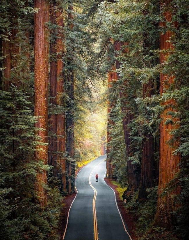 Национальный парк Редвуд, США