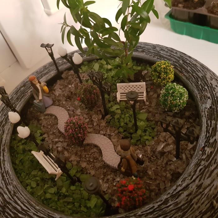 Мое маленькое увлечение Сад, Цветы, Миниатюрные сады, Хобби, Длиннопост