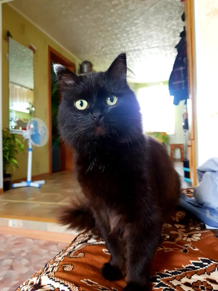 Сказал ему что он приёмный Кот, Котомафия, Взгляд