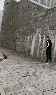 """""""Паркур"""" говорили они, ч. 2 Паркур, Собака, Собаки и люди, Гифка, Видео"""