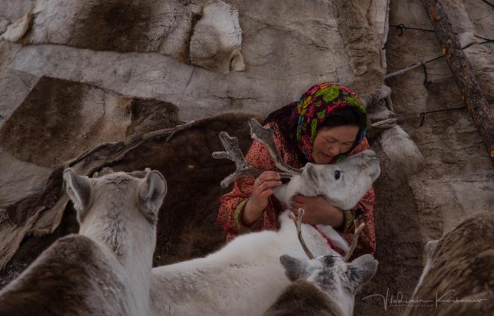 «Руки, пахнущие хлебом» Северные олени, Оленевод, The National Geographic, Север