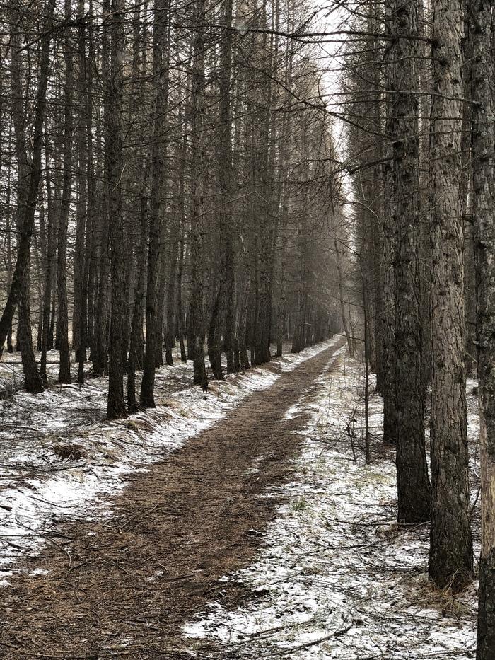 Сибирский Первомай. Фотография, Начинающий фотограф, Лес, Пейзаж