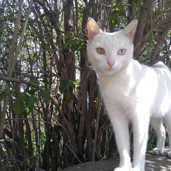 Кот, г. Кисловодск