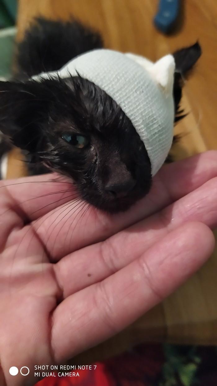 Спасение кота и новый друг в доме Кот, Добро, Спасение животных, Милота, Животные, Длиннопост