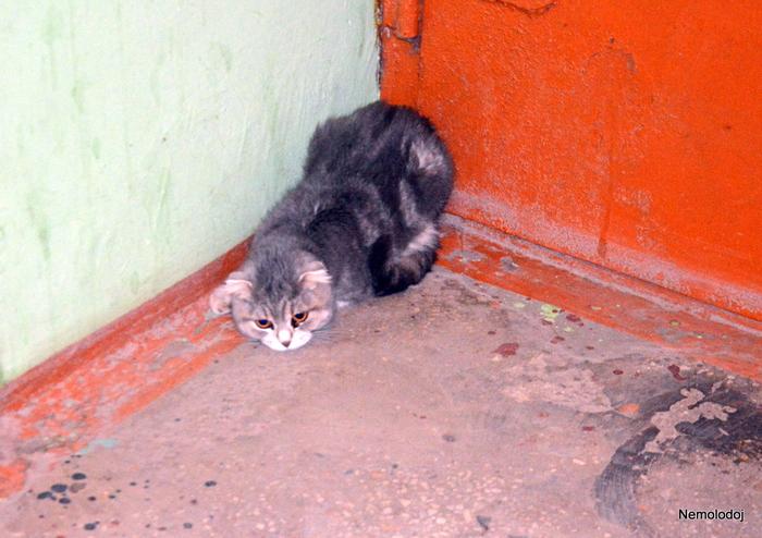 Добрые люди Люди и кошки, Подъезд, Спорное мнение, Длиннопост, Кот, Бездомные животные