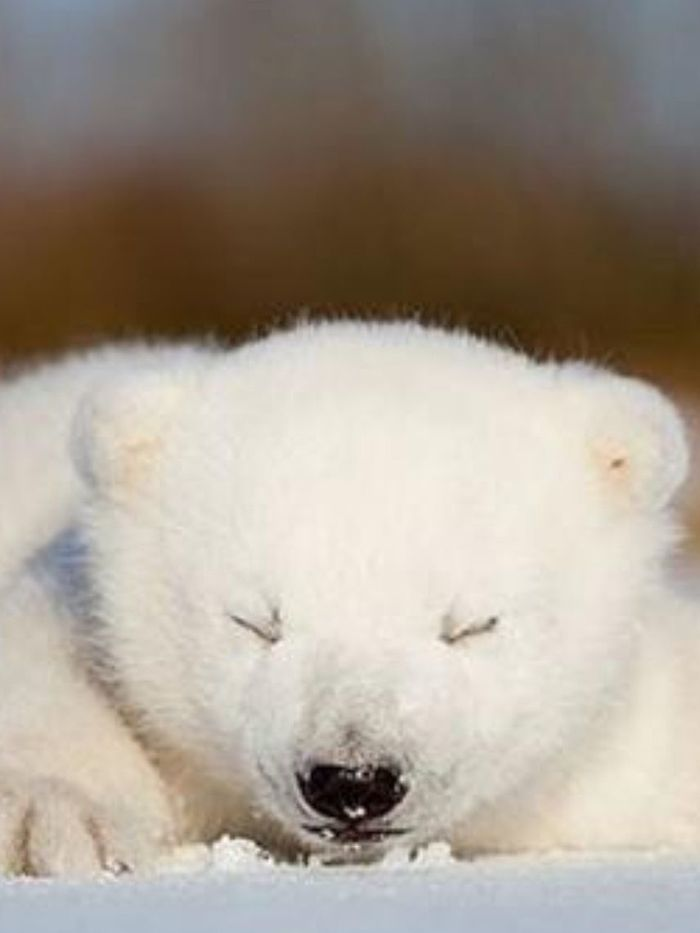 Спят твои соседи белые медведи