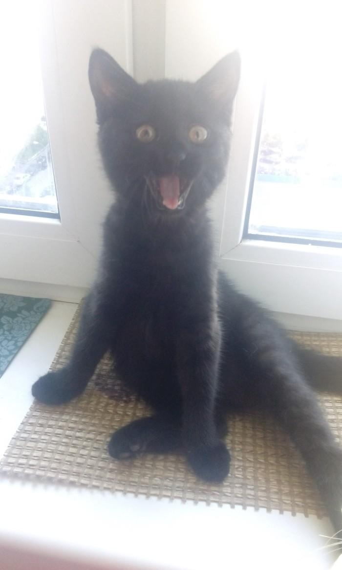 Весёлый котенок превратился в элегантную бестию) Кот, Котята, Люблю её, Длиннопост