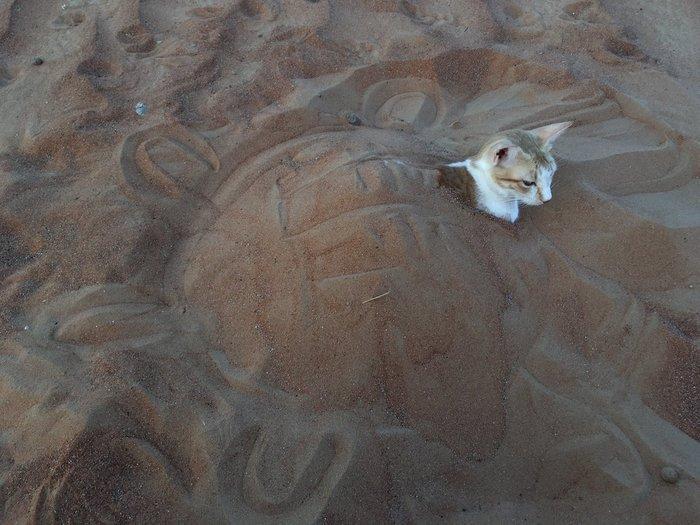 Кот, любящий купаться в песке Кот, Песок, Русалка, Котомафия, Видео, Длиннопост