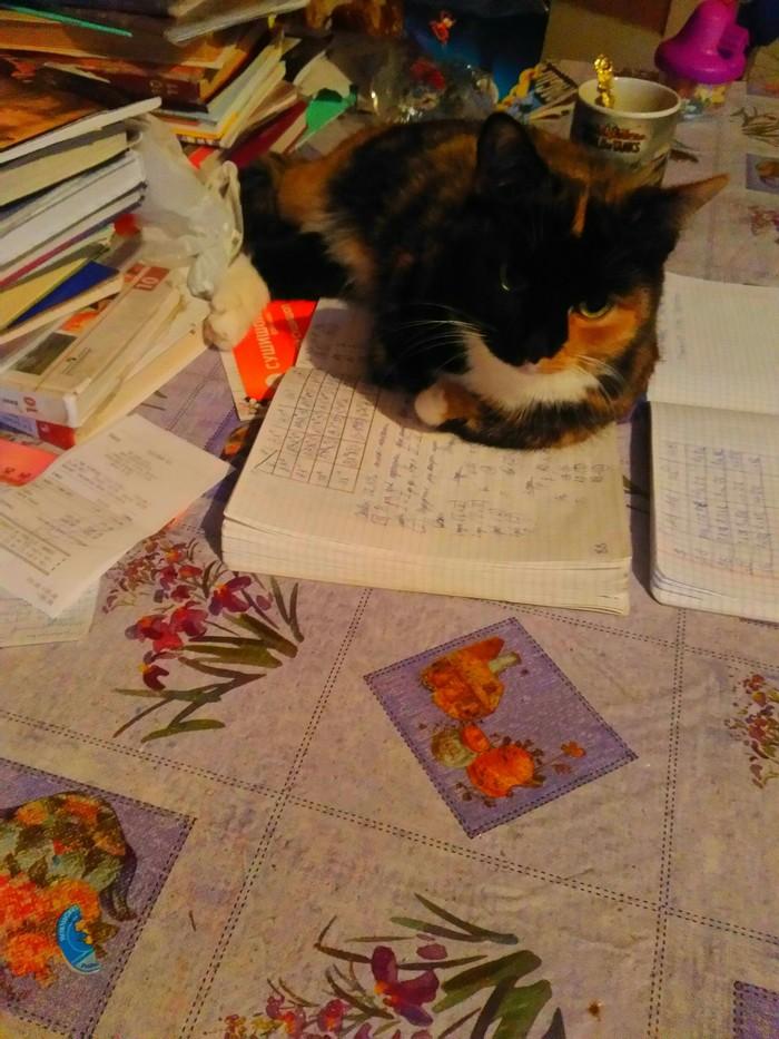 Первый раз в первый пост Трехцветная кошка, Мяу, Фотография, Кот
