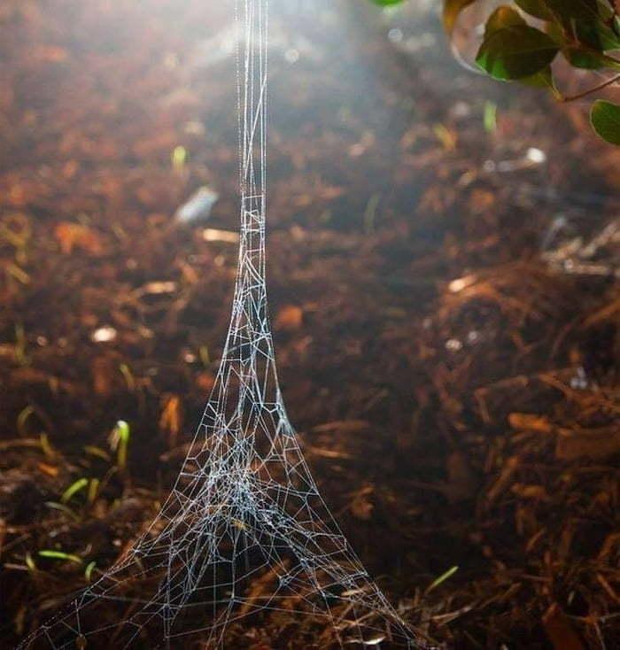 Когда ты паук и недавно побывал в Париже