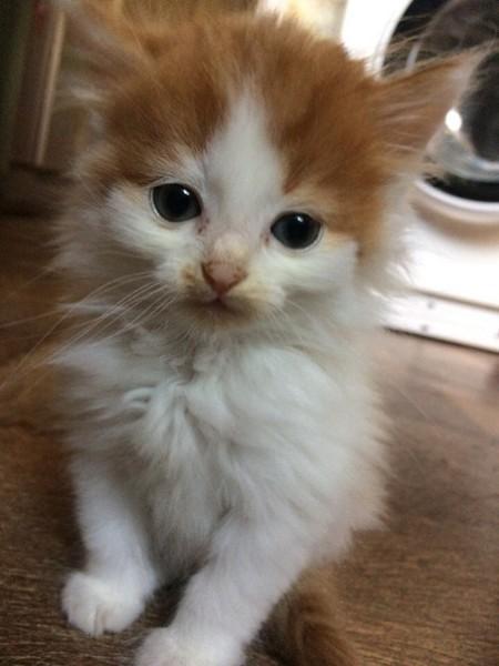 Хронология Кота, которого зовут Бас Кот, Коробка и кот, Длиннопост, Было-Стало