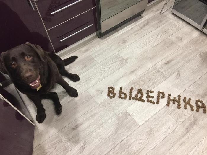 Выдержка #2 Лабрадор, Собака, Сестра, Выдержка