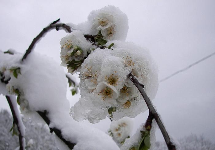 Май: я художник, я так вижу. Фотография, Италия, Снег, Апеннины, Длиннопост