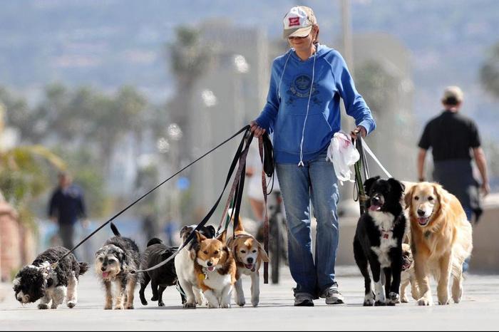Где можно гулять с собакой Собака, Выгул, Правила выгула собак, Культурный выгул, Длиннопост
