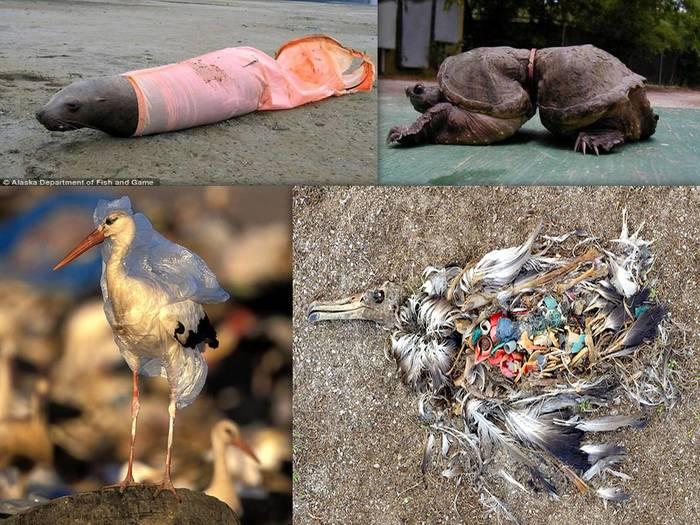 Съел и умер Экология, Пластик, Длиннопост