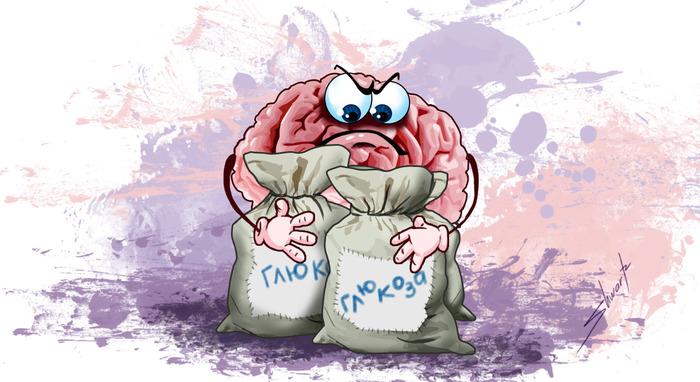 Глюкоза — основное топливо для нашего мозга Глюкоза, Мозг, Длиннопост