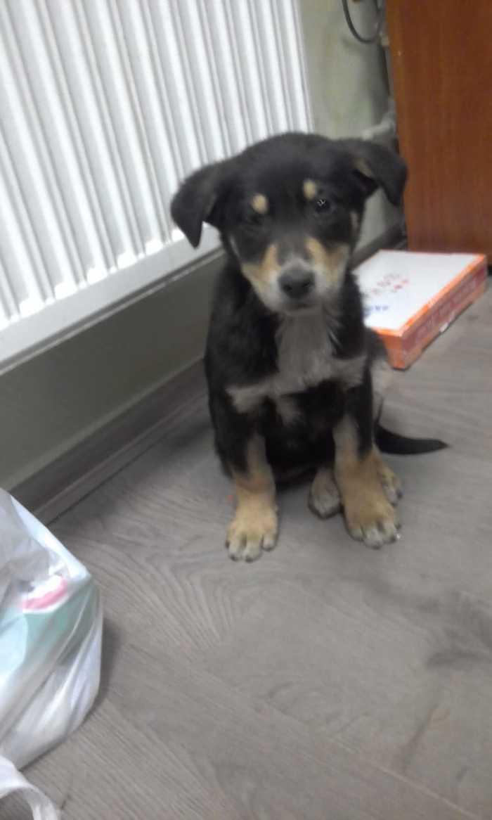 Найден щенок, около 4 месяцев Потеряшка, Без рейтинга, Видео, Длиннопост, Помощь животным, Подольск, Найдена собака
