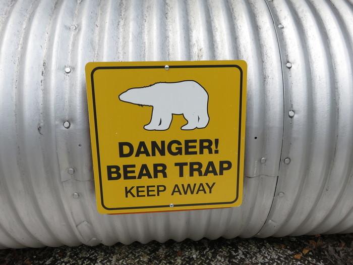 Так выглядит ловушка для медведей. Канада, Медведь, Фотография