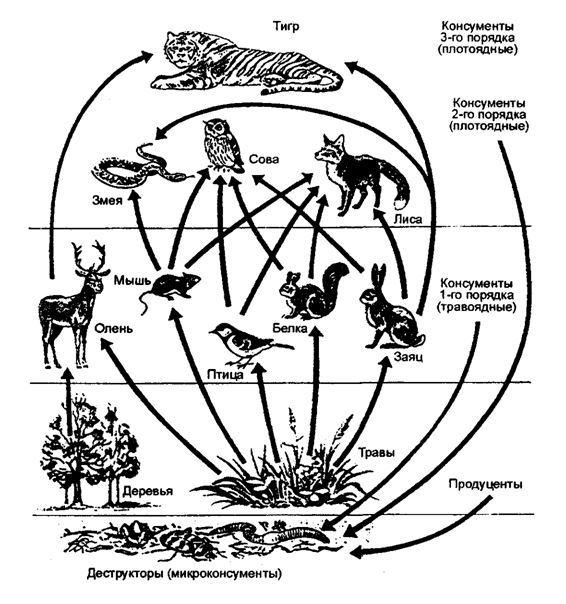 Насколько эффективно природа использует энергию. Природа, Экология, Солнечная энергия, Биология, Растения, Животные, Длиннопост