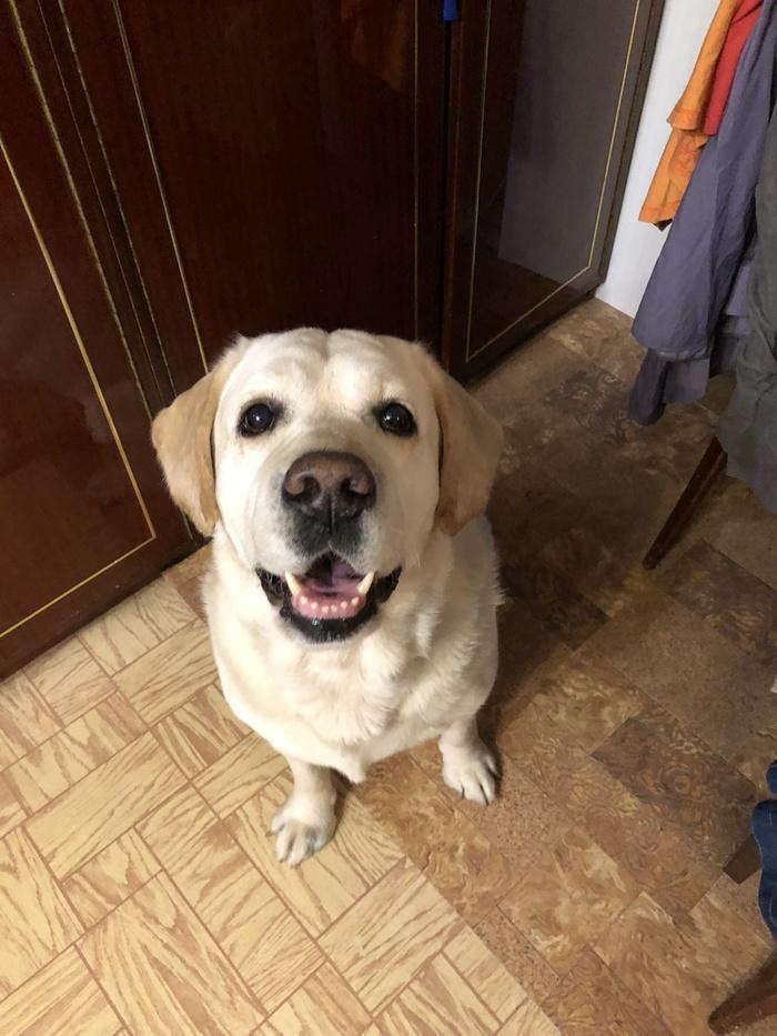 Пропала собака [Найдена] Мелихово, Пропала собака, Длиннопост, Собака, Без рейтинга, Чеховский район, Животные, Помощь животным