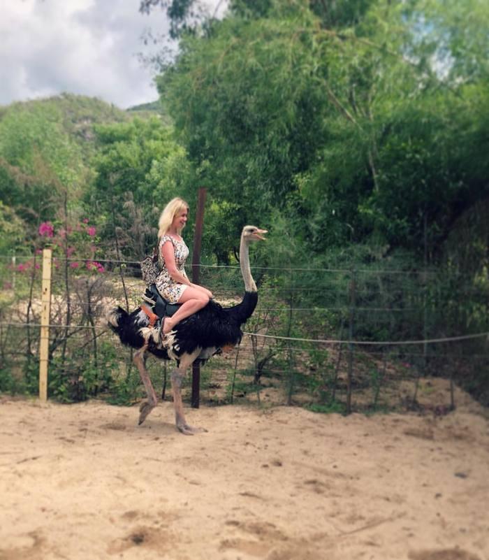 Покатаемся на страусе?) Путешествия, Страус, Вьетнам