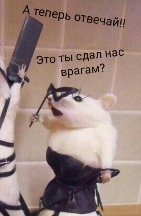 Крысиные драмы. Крыса, BDSM, Длиннопост