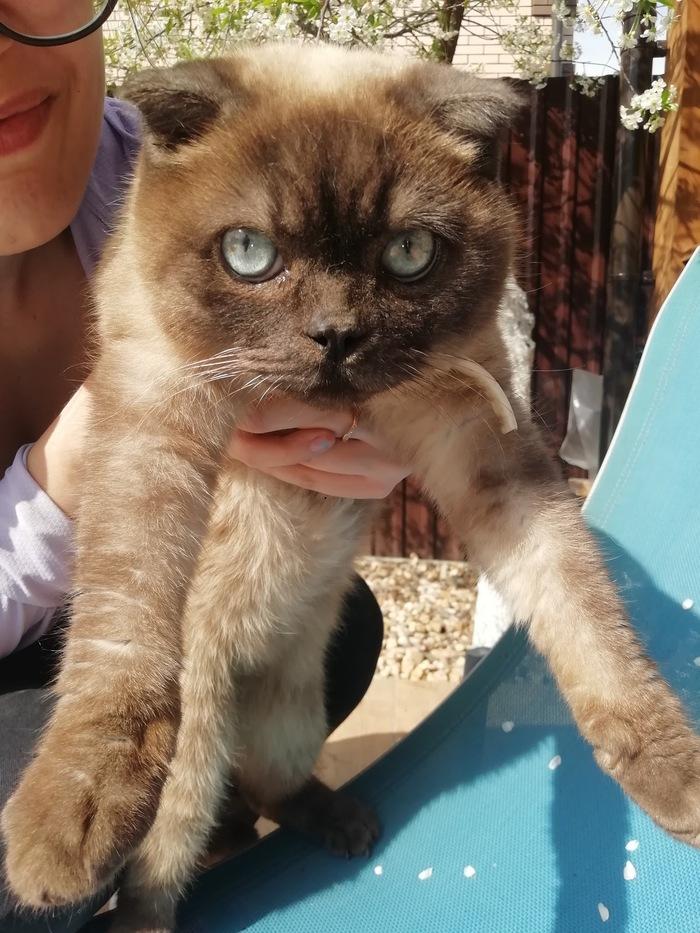 Котейка ищет дом Кот, Потеряшка, Сергиев Посад, Домашние животные, В добрые руки, Длиннопост, Без рейтинга