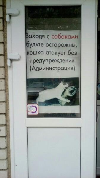 С собаками вход воспрещен Кот, Охрана, Собака, Смешные объявления